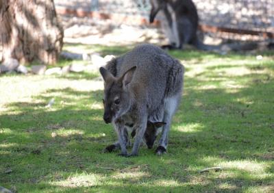Avustralya'ya gitme, Keçiören'e gel