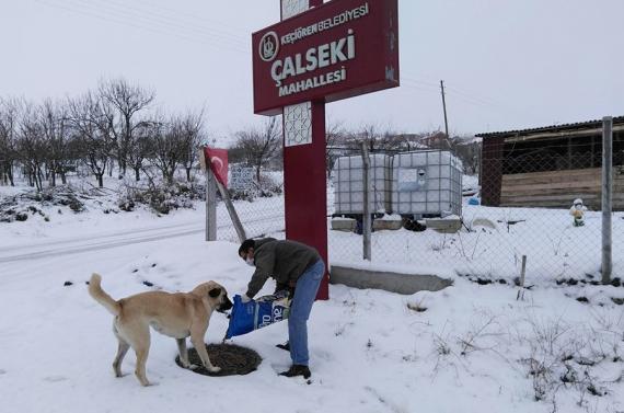 Keçiören'de sokak hayvanlarına kış yiyeceği