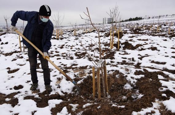 Meyve bahçesinin kış bakımı tamamlandı
