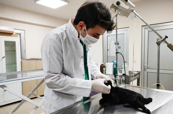 Yaralı kediye Keçiören Belediyesi sahip çıktı